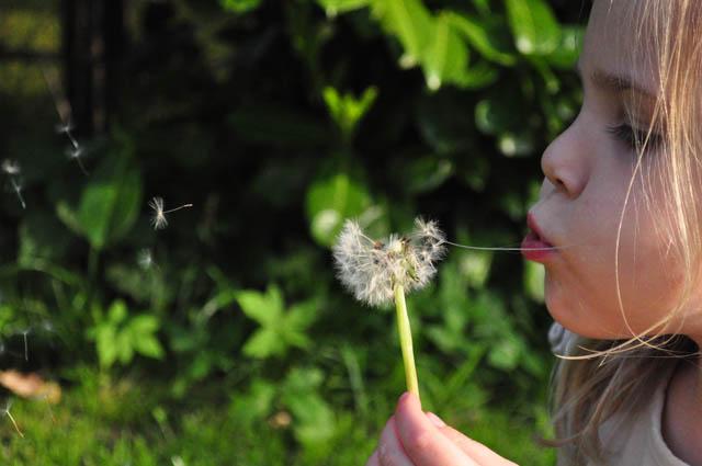 dandelionchild-Skitter Photo